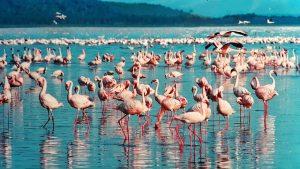 Flamingos beim rumstehen und Wasser nippen