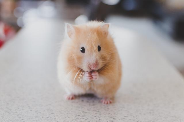 Erich der Hamster