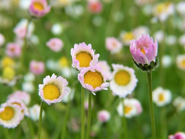 Glyphosat Blumen