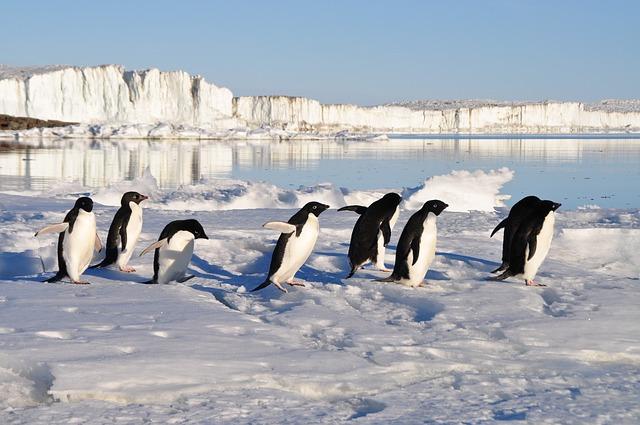 Pinguine auf der Flucht vor dem Klimawandel