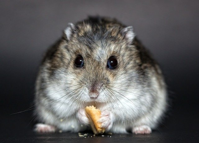 Hamsterkäufe und Vorräte